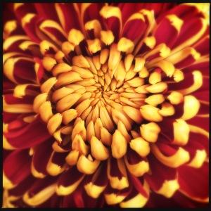 Photo by saskiasflowers.com
